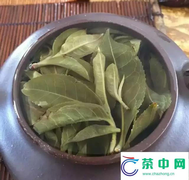 书剑古茶广州分舵麻黑茶王树开汤品鉴
