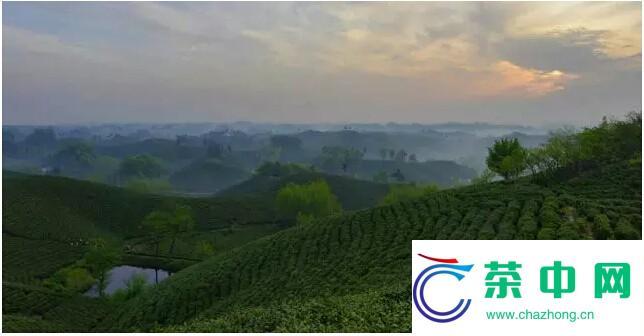 八角亭·问叶之旅〡普洱茶发源地