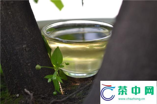 十周年纪念:关于茶文化,关于普洱茶(组图)