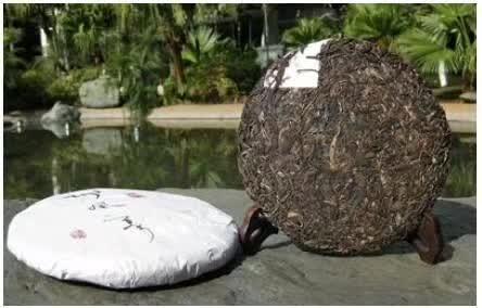 刮风寨丨百年古树,易武名茶