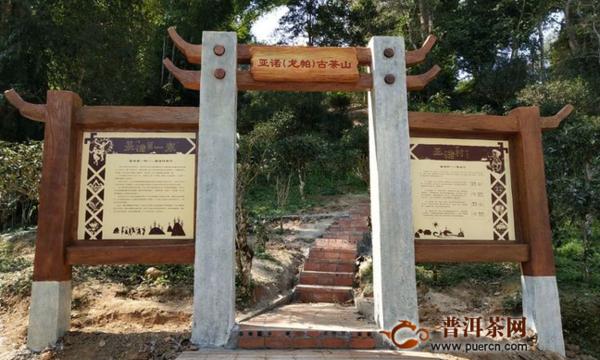 攸乐茶山出名的寨子